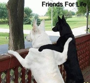Friends for life.
