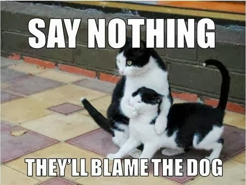 Say nothing – they'll blame the dog.