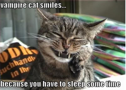 Vampire cat smiles because you-have to-sleep some time.