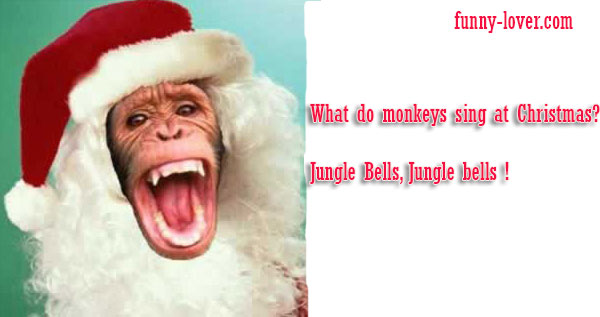 What do monkeys sing at Christmas? Jungle Bells, Jungle bells!