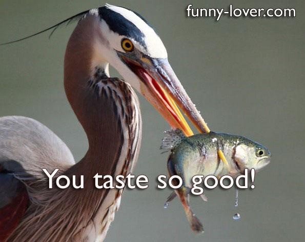 You taste so good!