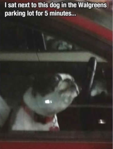I sat net to this dog in the Walgreens parking lot for 5 minutes