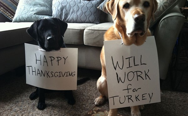 Happy-Thanksgiving-Will-work-for-turkey