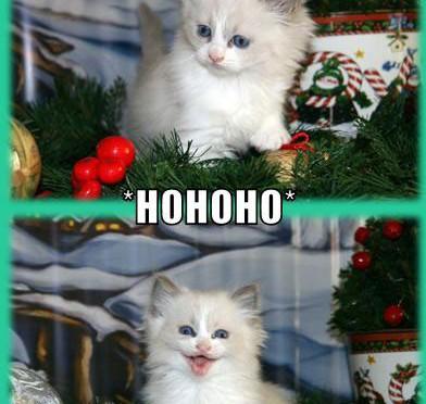 I-tink-I-hear-santa-HOHOHO-ITZ-SANTA