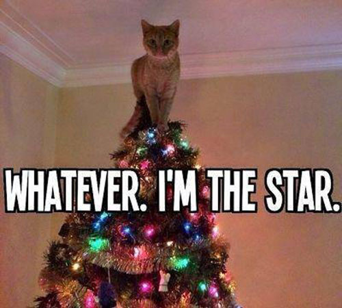Whatever. I'm the star.