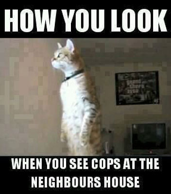 How you look when you see cops at the neighbours house.