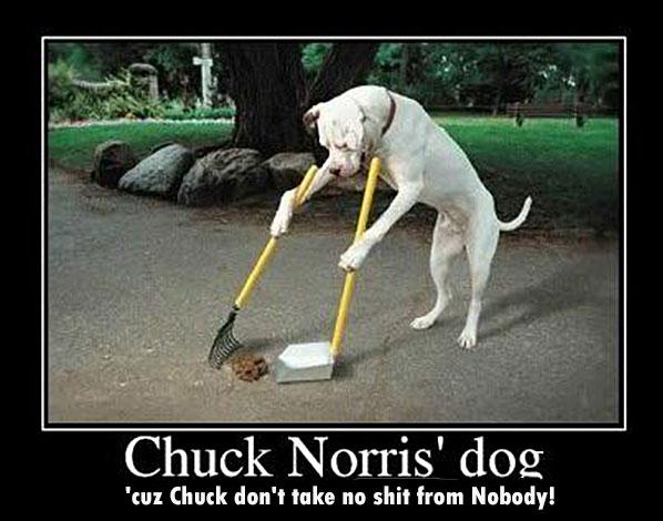 Chuck Norris' dog 'cuz Chuck don't take no shit from Nobody!