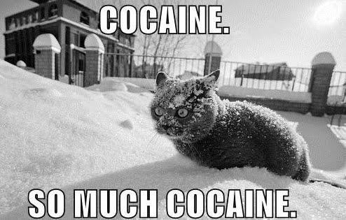 Cocaine so much cocaine.