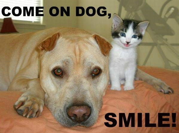 Come on dog, smile!