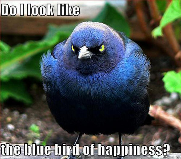 Do I look the blue bird of happiness?
