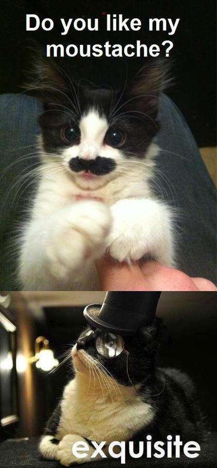 Do you like my moustache? Exquisite.