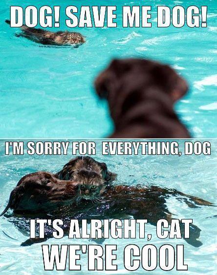 Dog! Save me dog!