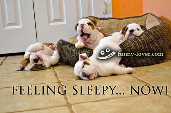 Feeling sleepy.. NOW!