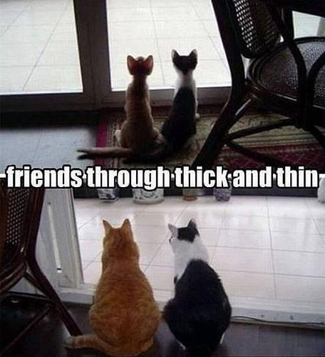 Friends through thick and thin.