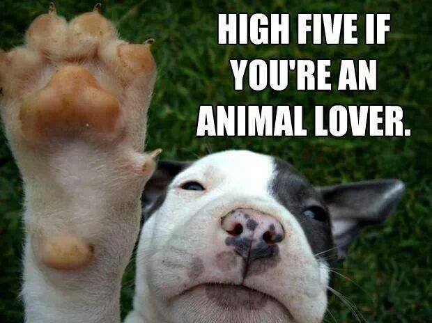 High five if you're an animal lover.