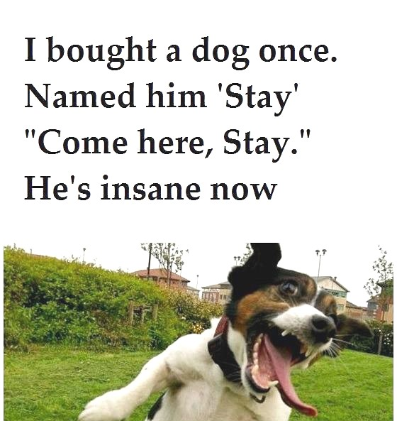 I bought a dog once. Named him 'Stay'.