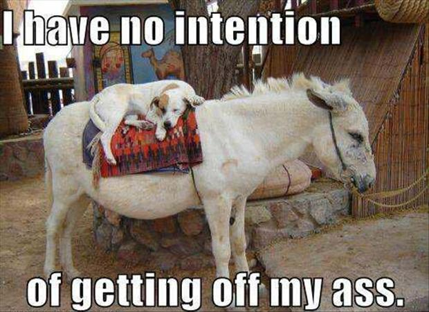 I have no intention of getting off my ass.
