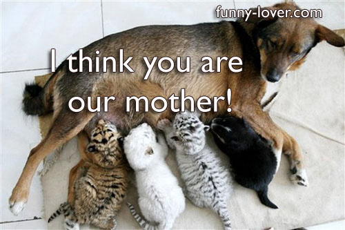 I think you are our mother.