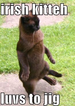 Irish kitteh luvs to jig.