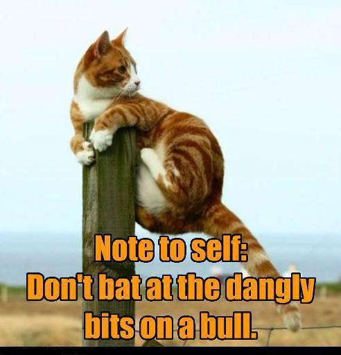Note to self: Don't bat at the dangly bits on a bull.