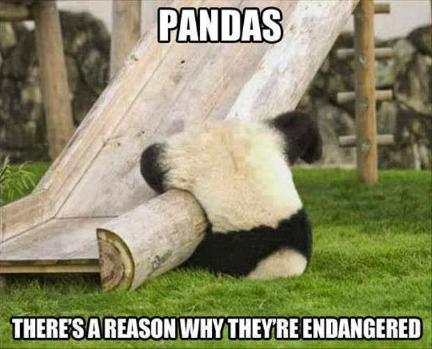 Pandas - there's a reason why the're endangered.