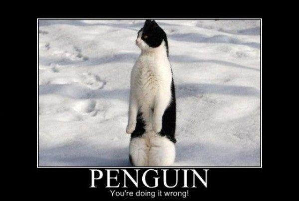 Penguin – you're doing it wrong!