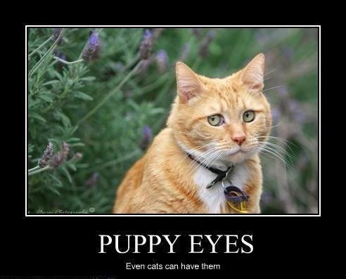 Puppy eyes – Even cats can have them.