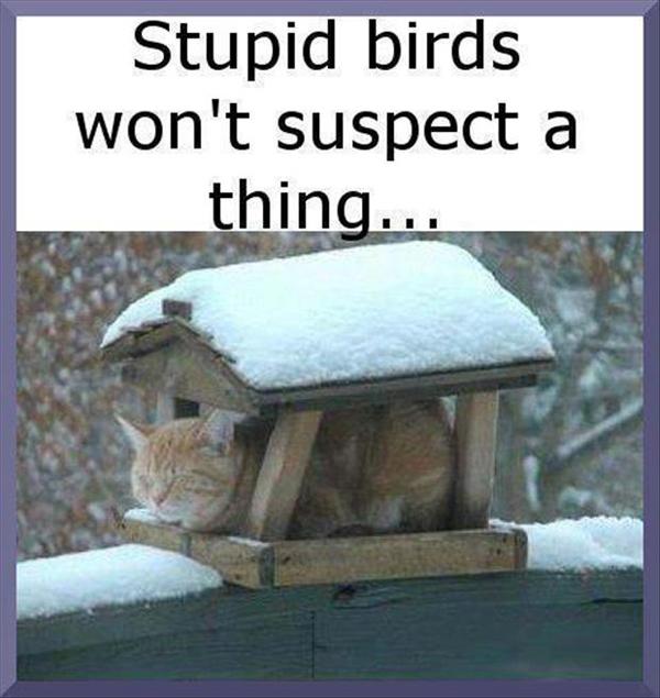 Stupid birds won't suspect a thing...