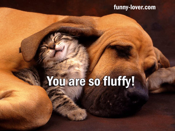 You are so fluffy!