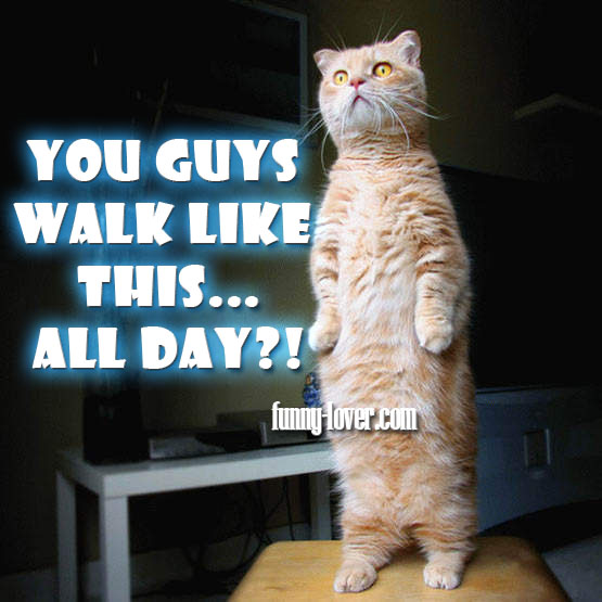 You guys walk like this… all day!?