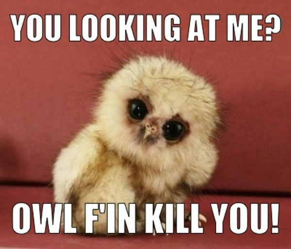 You looking at me? Owl f'in kill you!