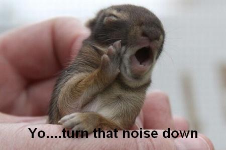Yo... turn that noise down.