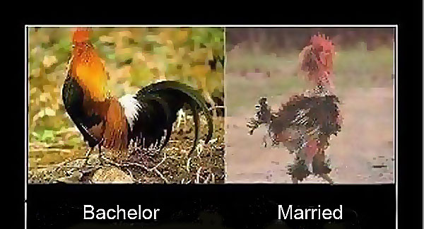 Married Bachelor