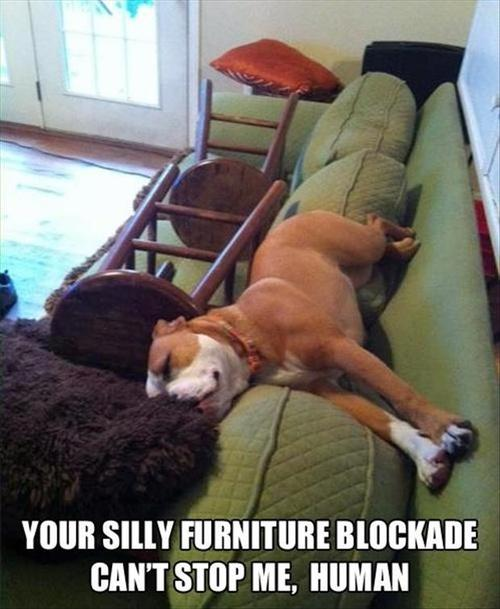 Your silly furniture blockade can't stop me, human.