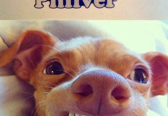 It's color is philver!