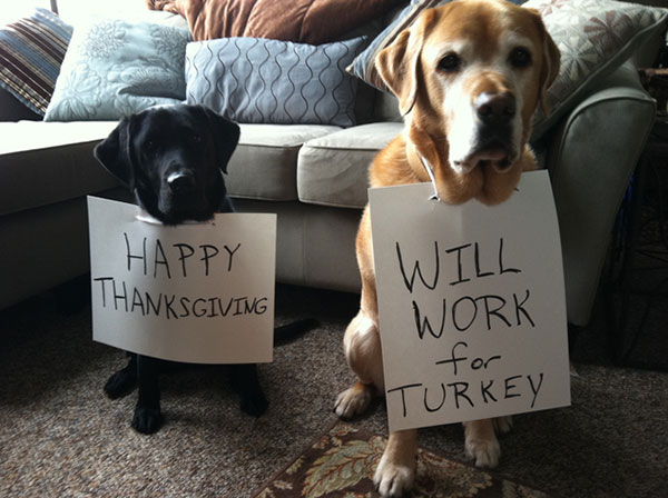Happy Thanksgiving! Will work for turkey?