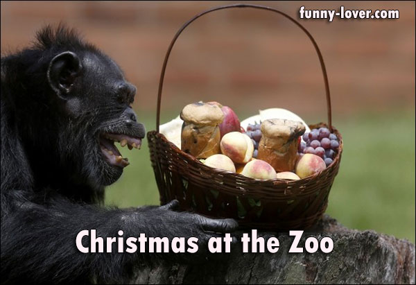 Christmas at the Zoo.