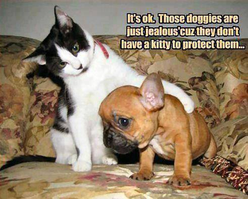 Those doggies are just jealous 'cuz they don't have a kitty to protect them
